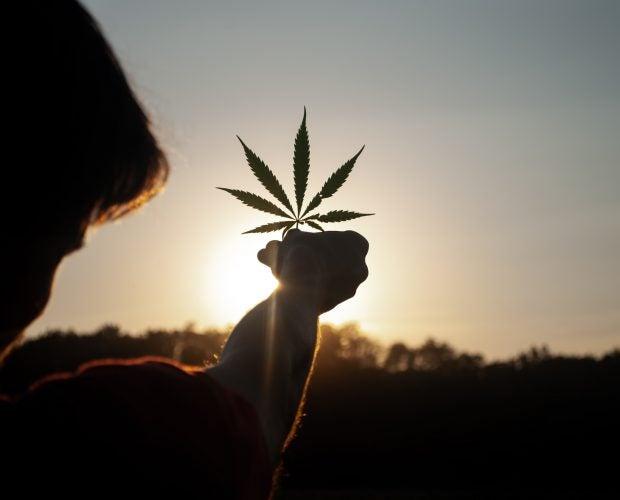 landrace cannabis strains