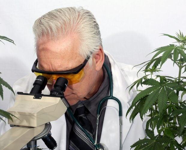 cannabis grading