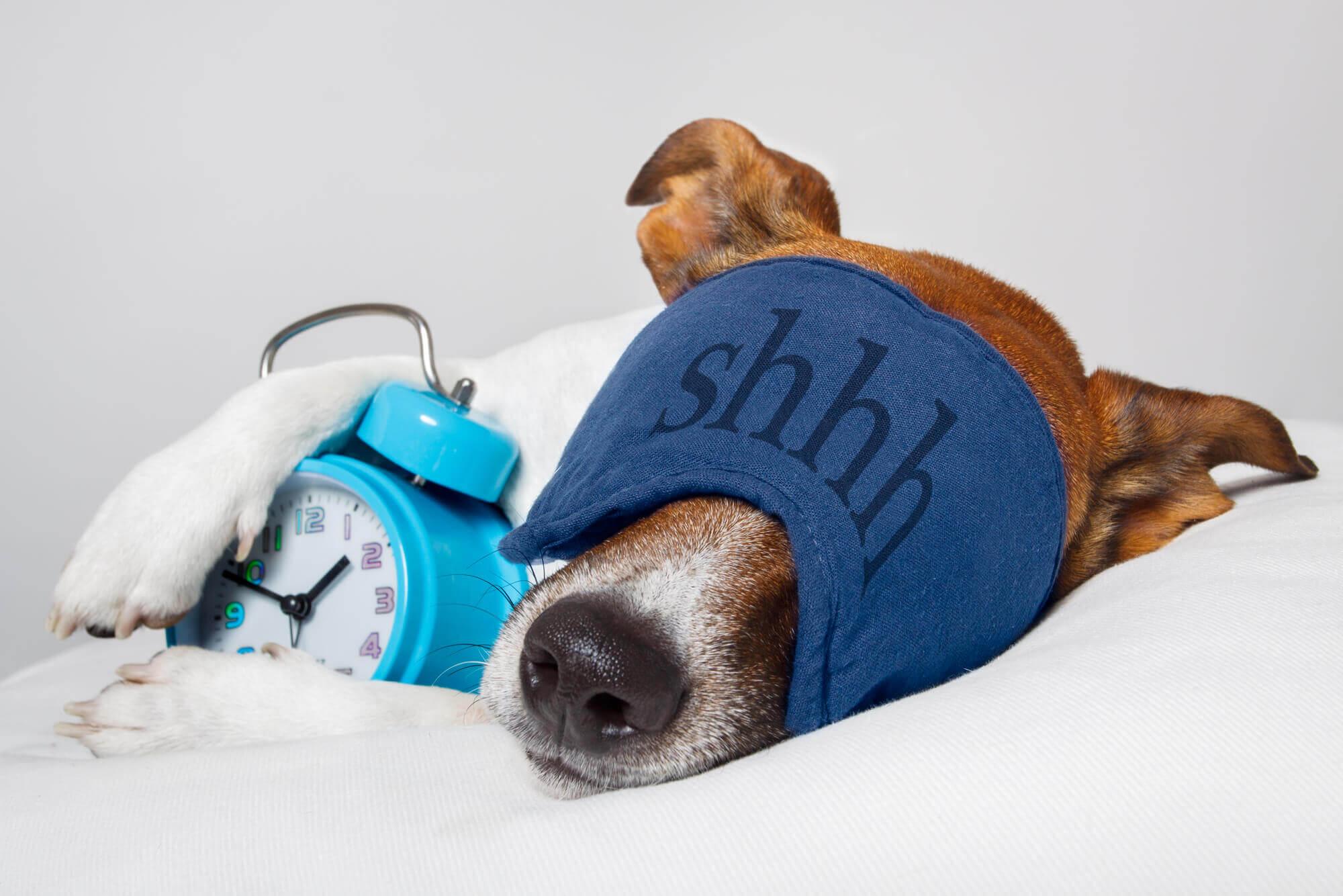 Best Indica Strain For Sleep