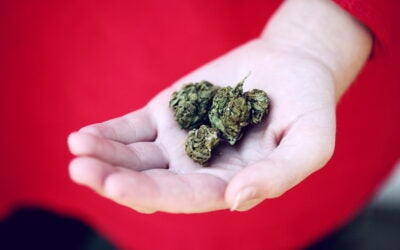 Why Shop For Small Buds vs Big Buds?
