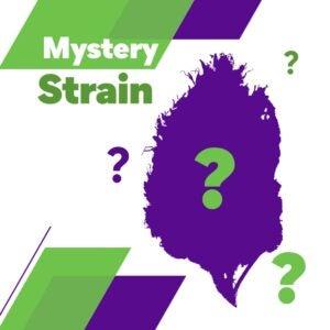 Mystery-Strain-XpressGrass