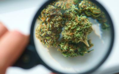 AAAA Grade Weed —  The Cannabis Grading System